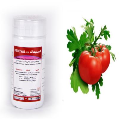 Essai: Comparaison de l'effet de FESTIVAL 250 EC avec le Bupirimate sur une culture de tomate infesté par l'oïdium